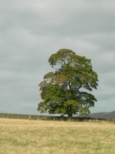 late_summer_tree