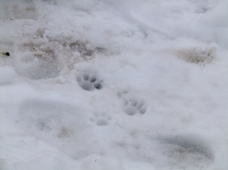 cat footprints