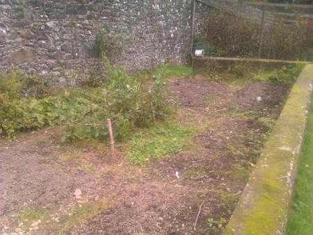 veg plot progress