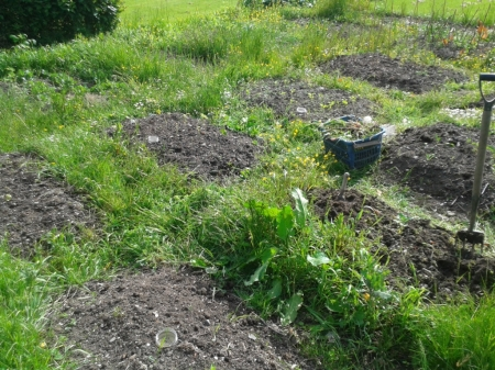 overgrown paths on vegetable plot