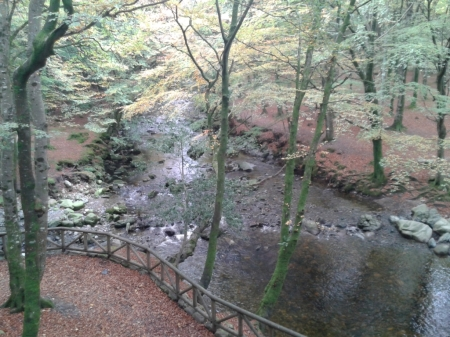 Tollymore forest and river