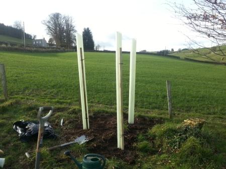paper birch tree tubes